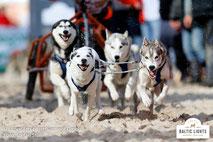 Schlittenhunde fliegen über den Sand © ExperiArts Entertainment - Stefan Stuhr