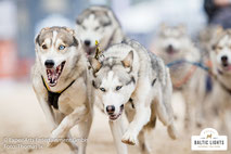 Wilde und schnelle  Hunde mitten im Rennen © ExperiArts Entertainment - Thomas Ix