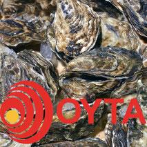 OYTA aus Austernschalen für Geflügel