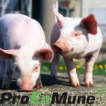 ProEnMune stärkt die Abwehrkräfte von Haus- und Nutztieren