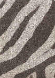 092-cebra Laminat für Ladenbau
