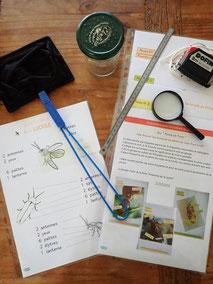 Deviens un observateur de lucioles (activités adaptables enfants ou adultes)