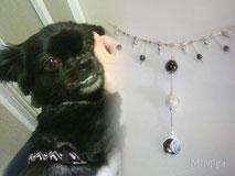 artistic-jewellery-mi-miga-personalized-memorial-necklace-sterling-silver-swarovski-crystals-pendant-animal-pet-hair-dog-luna