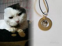 joya-artistica-memoria-recuerdo-con-pelo-animal-mi-miga-collar-plata-ley-aro-acero-grabado-engaste-cabuchon-cristal-charm-estrella-gato-van-gogh