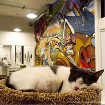 cat-town-cafe-adoption-center-glynda