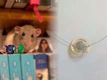 joya-artistica-con-pelo-animal-mi-miga-collar-recuerdo-acero-plata-ley-aro-grabado-perla-cristal-rata-greychi