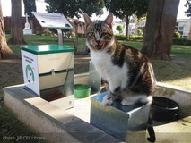 ces-utrera-punto-alimentacion-colonia-felina