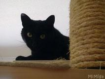 gato-rascador