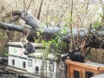 micos-do-barrio-colonia-gatos