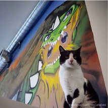 cat-town-cafe-adoption-center-pilot