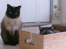 gatos-jugando-caja