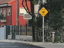 micos-do-barrio-senal-trafico-gato-cruzando