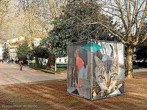 micos-do-barrio-exposicion-gatos