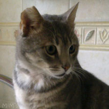 mi-miga-about-us-leo-special-needs-cat