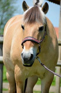Chiropraktik Pferd München