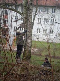 Nistkastenreinigung (Foto: Gudrun Edner)