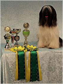 BOB Paaren 2014 Tibet Terrier Man-Dara-Wa E-na-ya-Skar-ma
