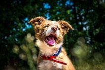 Puppy cursus Hondenschool De Lijn