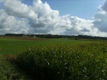 Landwirtschaft, Ackerbau, Fressererzeugung, Bullenmast, Rinder