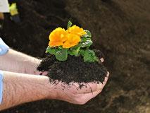 Pflanzerde, Blumenerde, Erde, Mutterboden