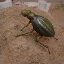 Insecto Gigante, Museo del Rio, Valladolid