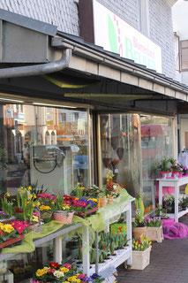 Das Blumenland Beuler legt höchsten Wert auf ein ansprechendes optisches Erscheinungsbild. Narzissen, Primeln, Tulpen und alles was das Blumenherz begehrt.
