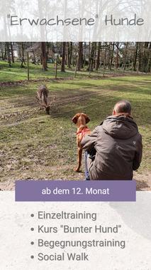 Dame hockt mit jungem Magyar Vizsla im Wildpark in der Nähe von Rotwild und beobachtet ruhig