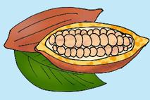 Kakaobohne Zeichnung