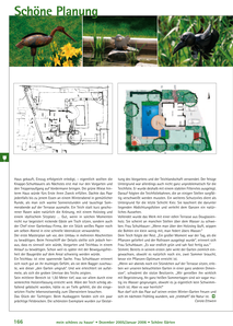 Gartenplanung und Gartenumgestalung Privatgarten in Bräunlingen