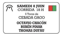 Toros de Cebada Gago pour Octavio Chacon, Ruben Pinar et Thomas Dufau