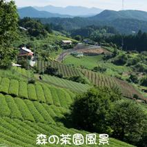 森の茶園風景
