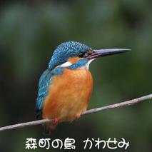 森町の鳥 かわせみ