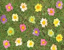 Grußkarte Blütenwiese Blumen Priemeln Frühling