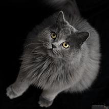 Katzenfotos vom Tierfotografen