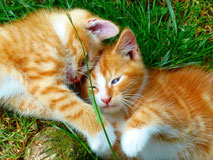 Katzen auf dem Bauernhof in der Eifel