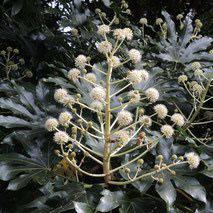 冬に白い花が咲く木