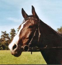 Pferd Pandorra