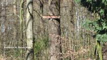 Bredthöhe im Barmer Wald