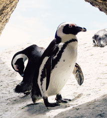 Pinguin Atypical Serien Filme Netflix Jungs 2020 Teenager Tipps Ideen