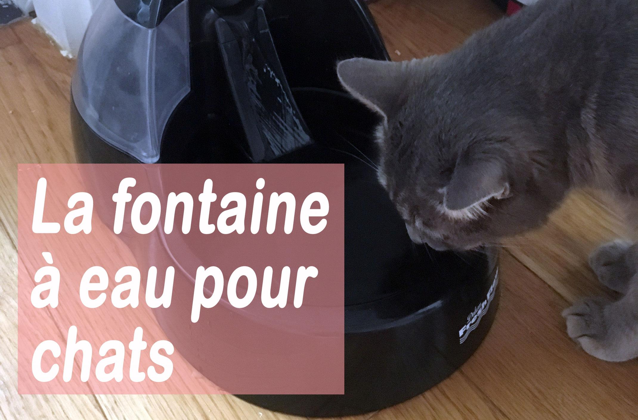 Bruit Griffe Chien Parquet la fontaine à eau pour chat : bonus santé et bien-être - je