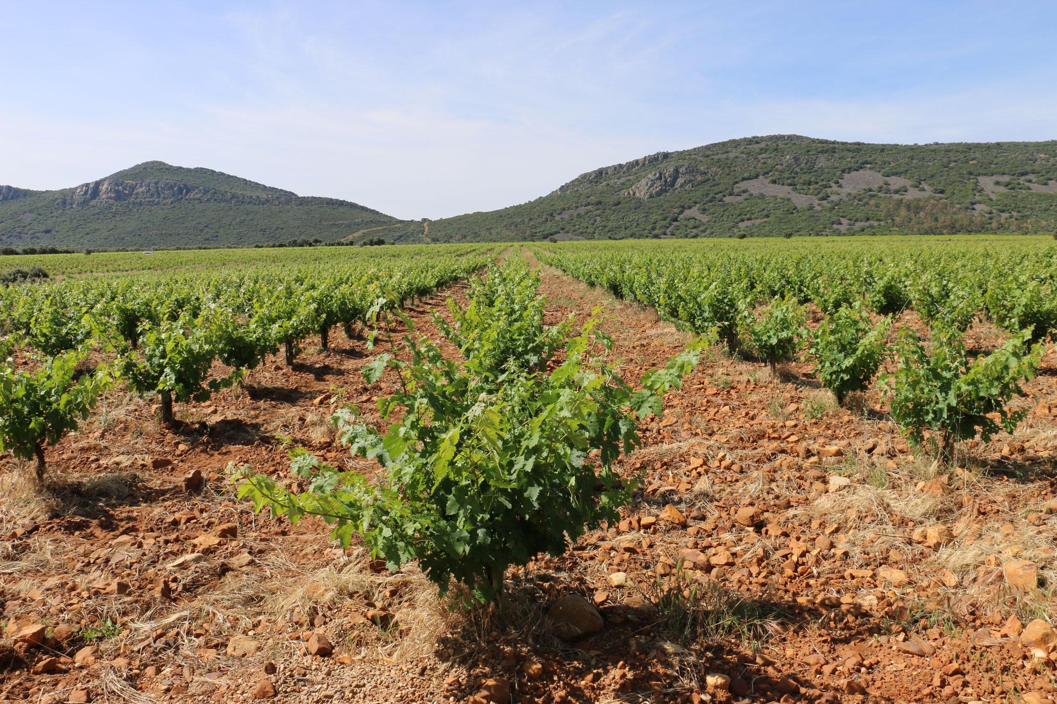 Pago los Balancines - vinwin - Der Weintest für Studenten und ...