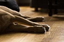 Hund liegt auf der Seite von Pixabay/dife88