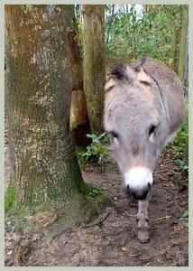 Dreigende ezel (blijf uit mijn buurt!).