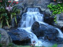 Hawaiianische Heilkunde