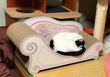 実物(ベッド)