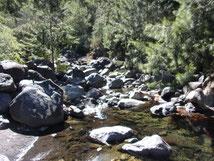 Ruisseau réunion
