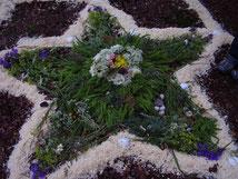 Die heilige Mitte der Venusblume auf dem Pferdskopf vom 06.06.2012 zum Venustransit.