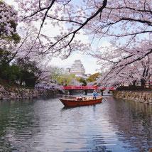 桜の姫路城 古家淳さん,桜フォトコンテスト,2020,橋本屋賞,