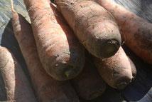 オーガニック野菜販売 無農薬野菜販売 ニンジン