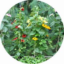 Garten- und Zimmerpflanzen